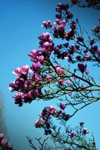 Fleurs du jardin Japonais sur l'île de Versailles à Nantes